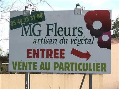 MG Fleurs COURS